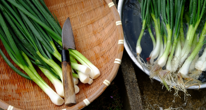 家庭菜園で作る!ワケギの育て方をご紹介します
