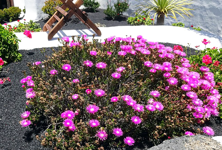庭の台風対策③花壇