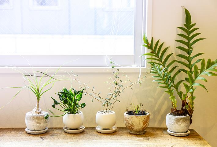 サイズ別観葉植物をおしゃれに飾るコツ