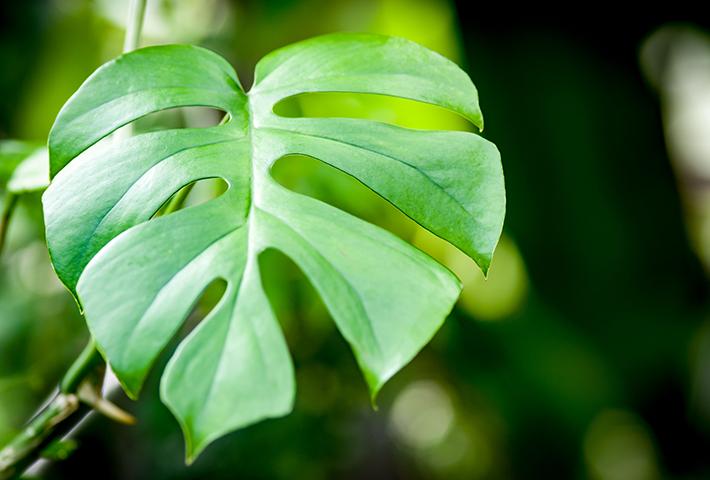観葉植物を育てるポイント