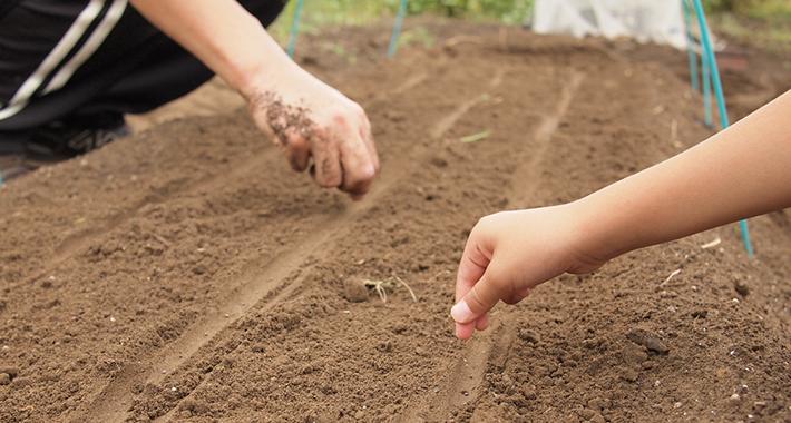家庭菜園の初心者必見!土作りの基本