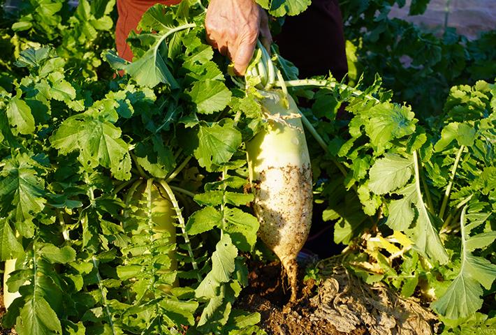家庭菜園の土作りのポイントは?