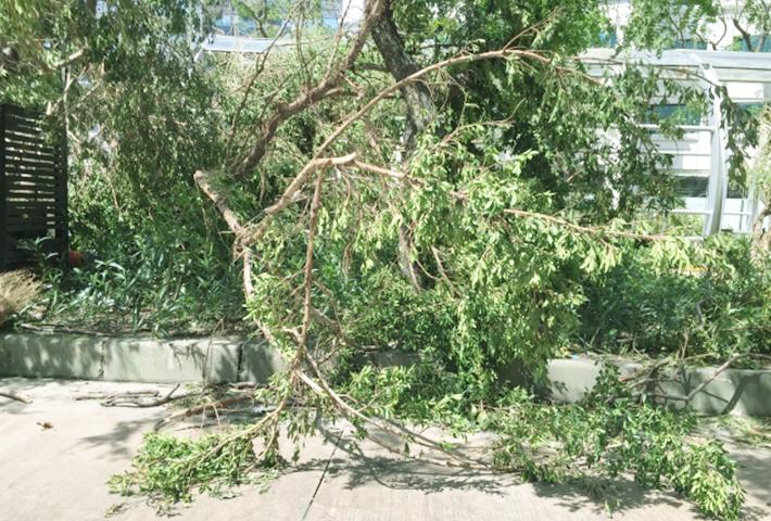 ガーデニング台風対策④庭木