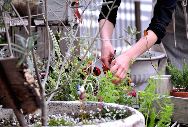 ガーデニングのお悩み④植物が元気に育たない