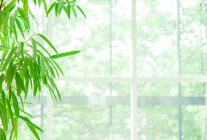 部屋の暑さ対策・グリーンカーテンはエアコンよりも有意義