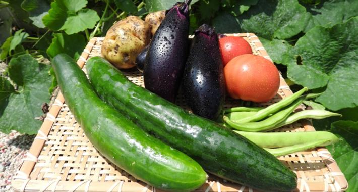 家庭菜園のお悩みを解決!連作障害の予防と対策をご紹介