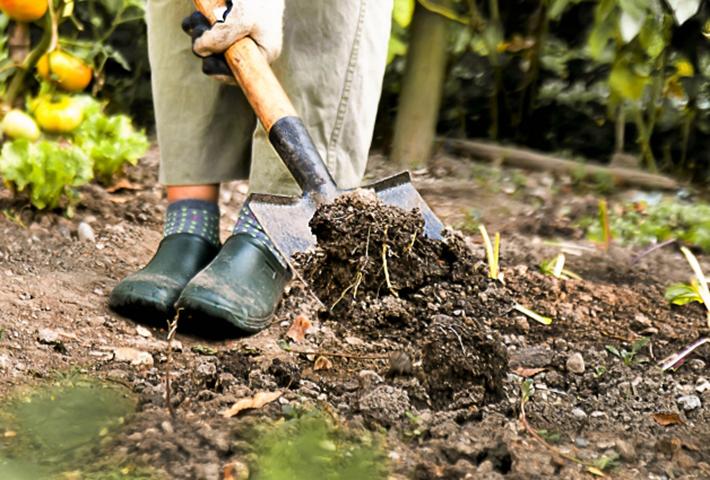 家庭菜園のお悩み・連作障害の予防と対策