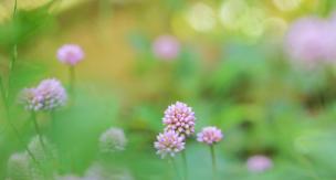 グランドカバーは芝生だけじゃない!おしゃれ&おすすめの常緑植物10選