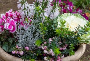 秋の花でガーデニング!寄せ植えにおすすめの花15選