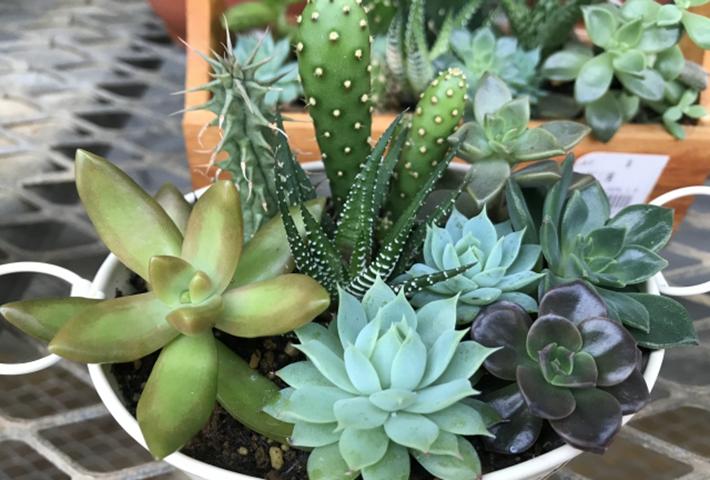 秋のガーデニング・寄せ植えの作り方(ポイント)