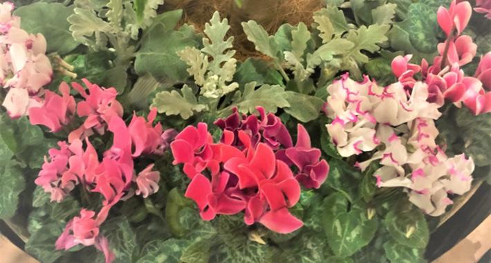 冬の花でガーデニング!寄せ植えにおすすめの花10選