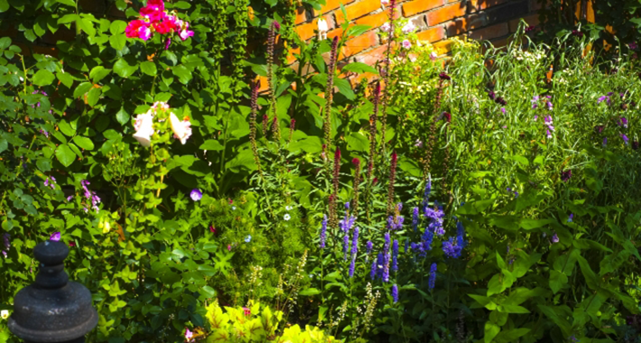 ハーブと野菜を一緒に育てる!家庭菜園の害虫対策をご紹介
