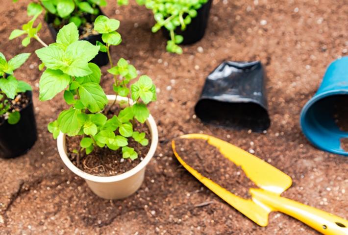 家庭菜園の害虫対策・ハーブの種類と野菜との相性