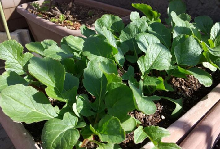 無農薬で家庭菜園の害虫駆除・無農薬栽培とは