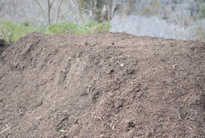 無農薬で家庭菜園の害虫駆除・無農薬栽培の基本