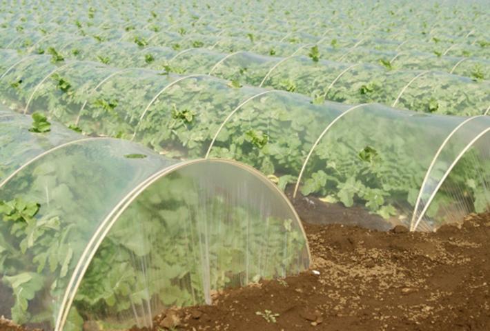 無農薬で家庭菜園の害虫駆除・①防虫資材で防ぐ