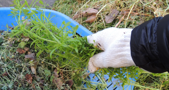 雑草対策!おすすめの対策3つをご紹介♪キレイなお庭をキープしよう