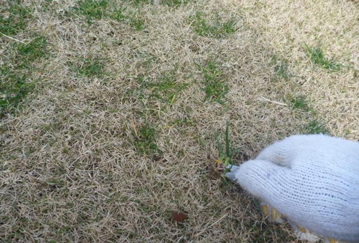 雑草対策・早目の除草