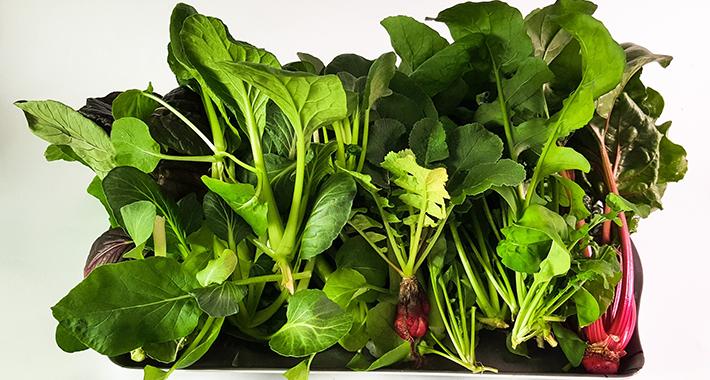 捨てちゃう野菜くずを再利用!再生栽培のリボベジしてみませんか?
