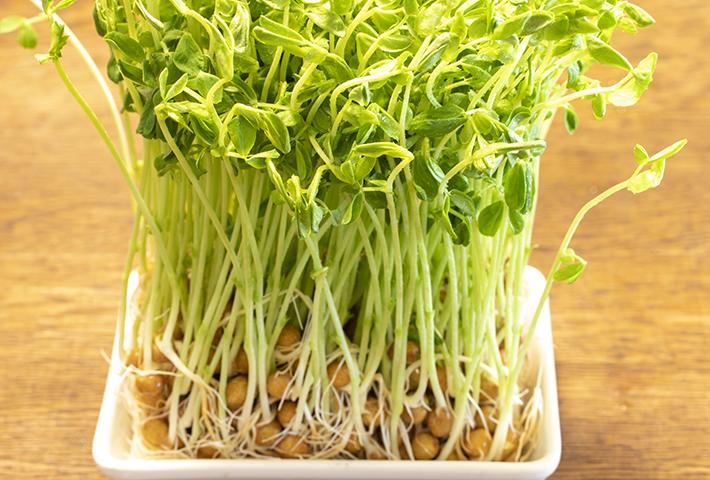 野菜くずを使った再生栽培「リボベジ」とは?