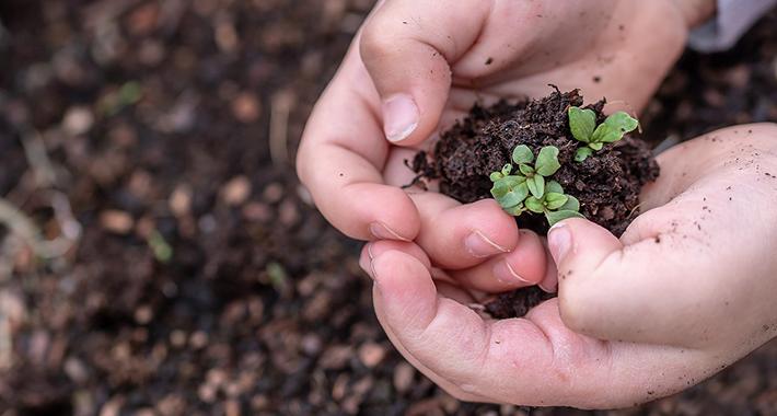 種と苗の違いって?育てるならどっちがいいの?全部教えます♪