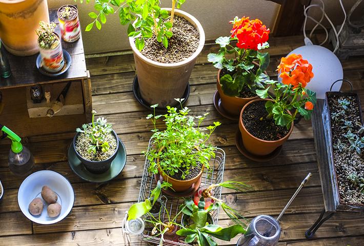 種と苗、おすすめポイントと注意点の違い