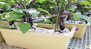 初心者がやりがち!プランター菜園で植物が枯れる3つの原因