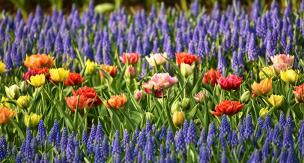 推し色に庭を染める!推し色ガーデニングで寄せ植えを楽しもう♪