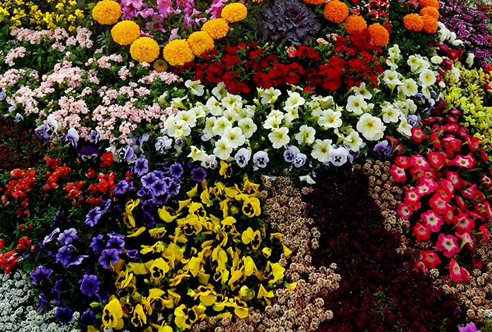 色別!寄せ植えガーデニングにおすすめの植物