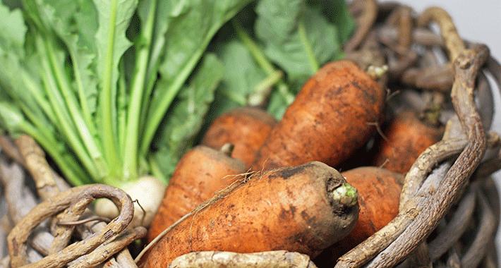 意外と簡単!冬の家庭菜園におすすめの野菜TOP5!