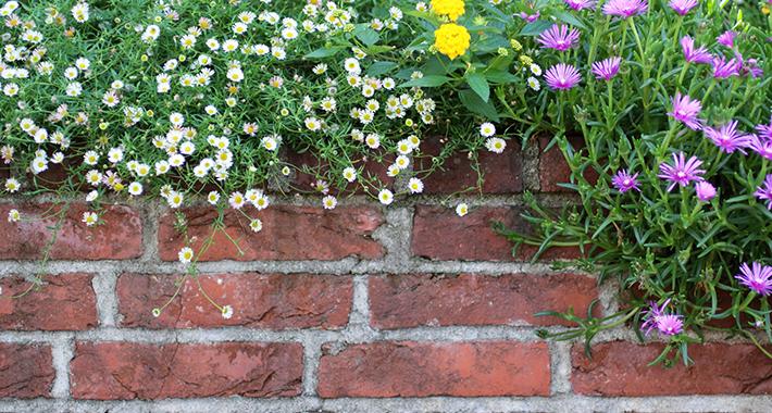 初心者でも簡単にオシャレな花壇作り!親子で楽しむ花壇の作り方♪