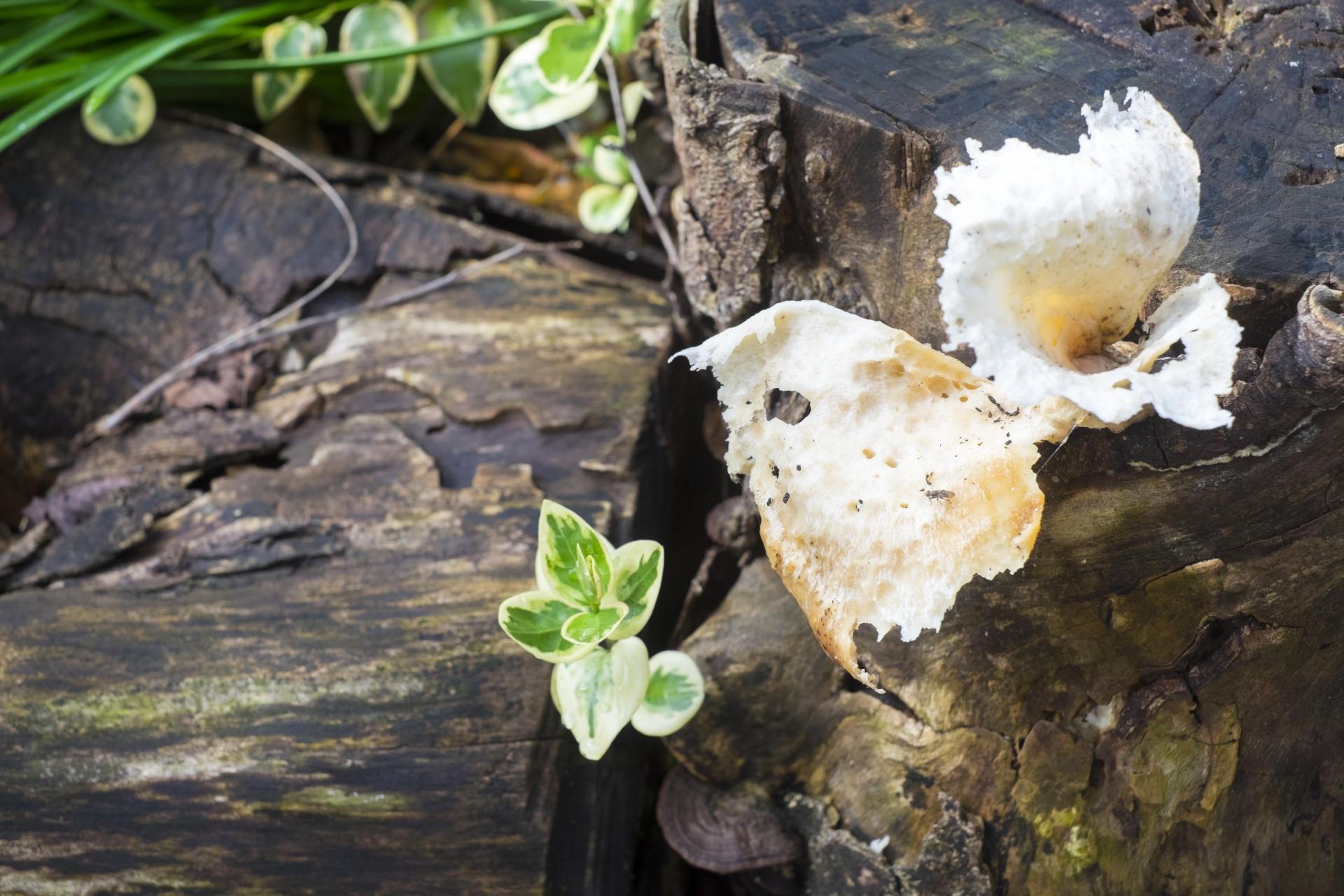 観葉植物にキノコが生えた原因