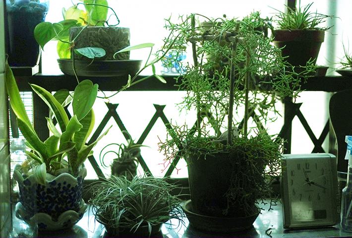 観葉植物にキノコが生えたらどうなるのか