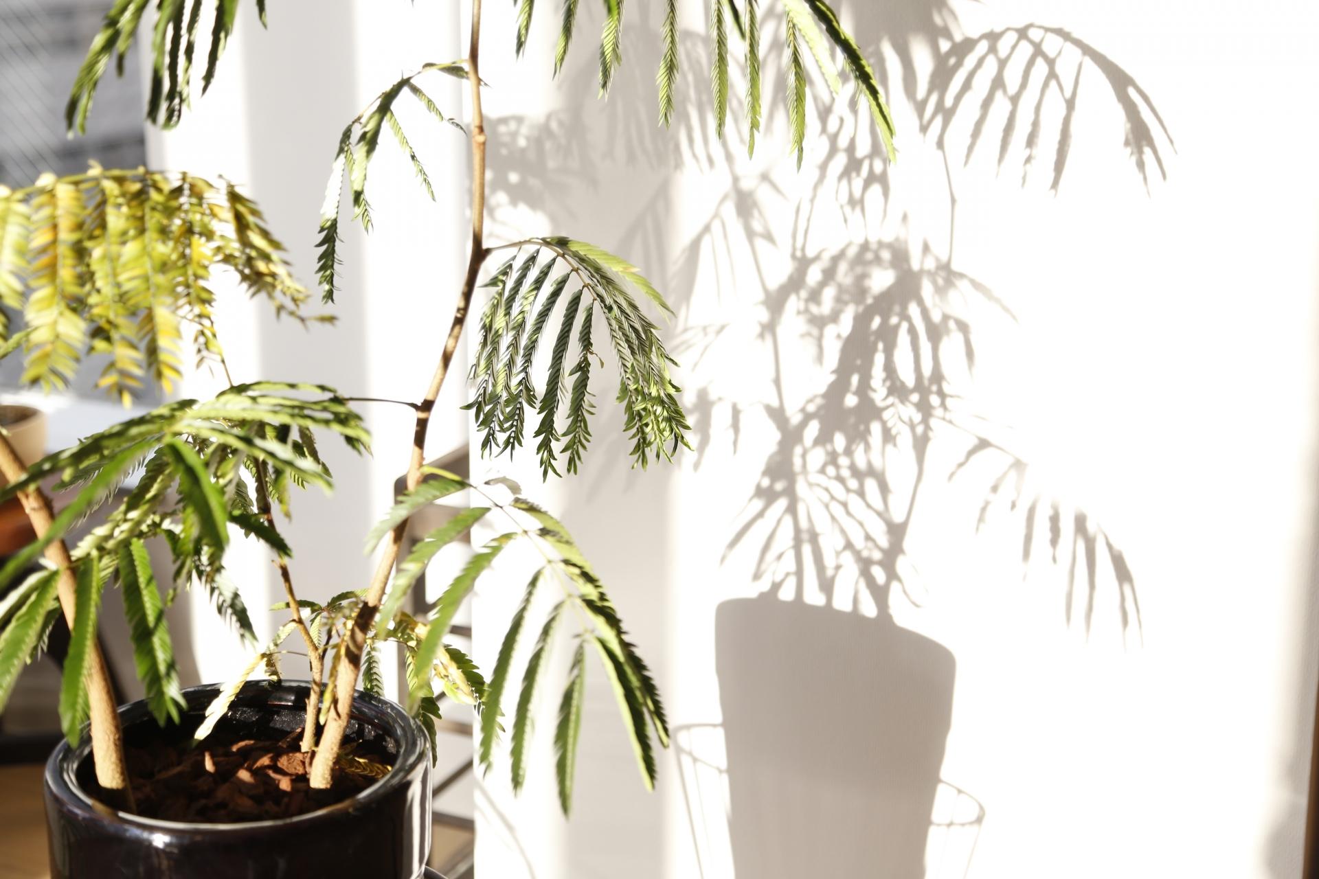観葉植物にキノコを生やさないための対策