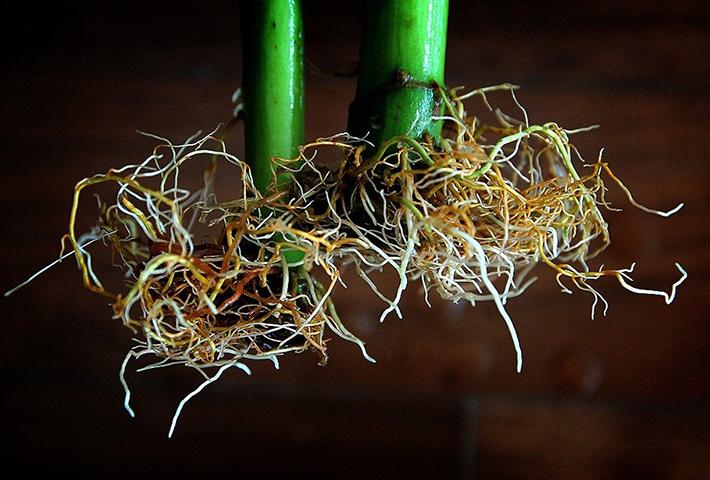 水耕栽培で根腐れする大きな原因3つと対処法