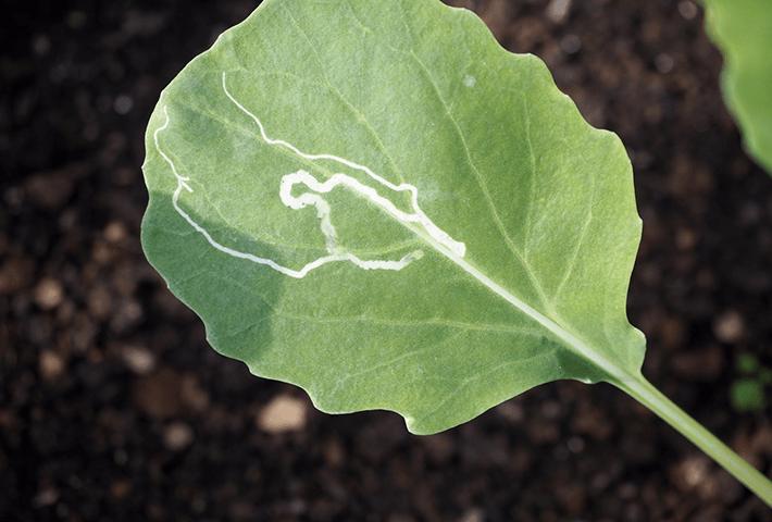 植物の元気がない原因その3 病害虫のトラブル