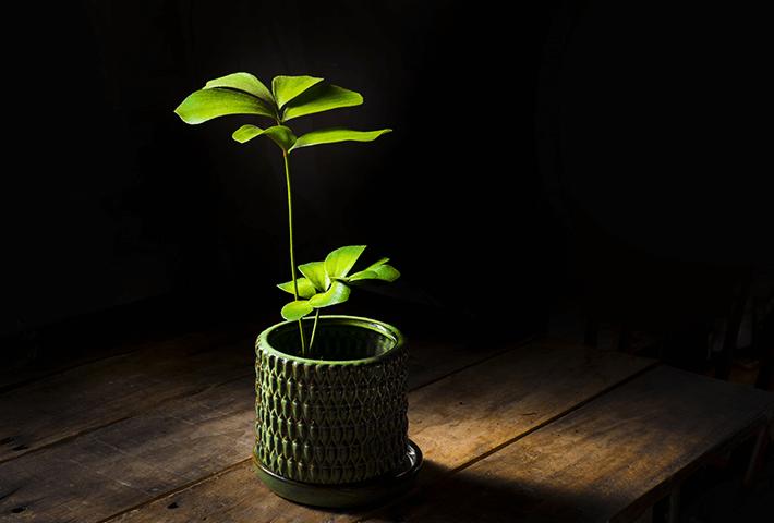 観葉植物の土にカビが生える原因とは?