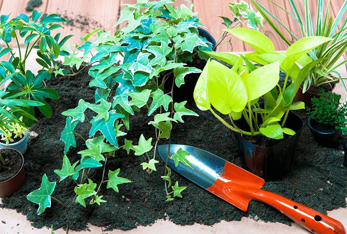 土にカビが生えた時の対処方法