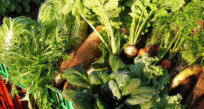 ずぼらな方向き?!植えっぱなしOKの植物で家庭菜園をつくろう!