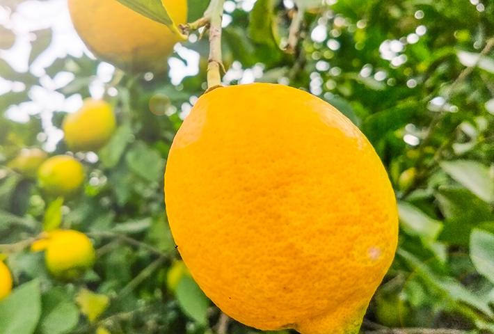 家庭菜園で育てやすい果物3選