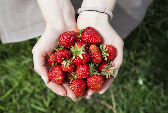 家庭菜園で果物の栽培を成功させるポイントとは?