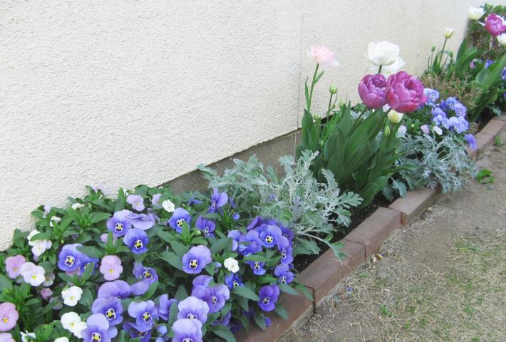 色の相性を考えた花を植える