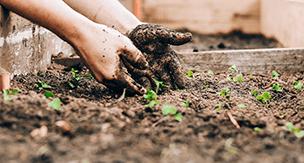 植木鉢で家庭菜園を楽しむ時の土作りのコツとは?