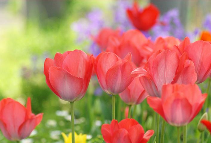 春のガーデニング