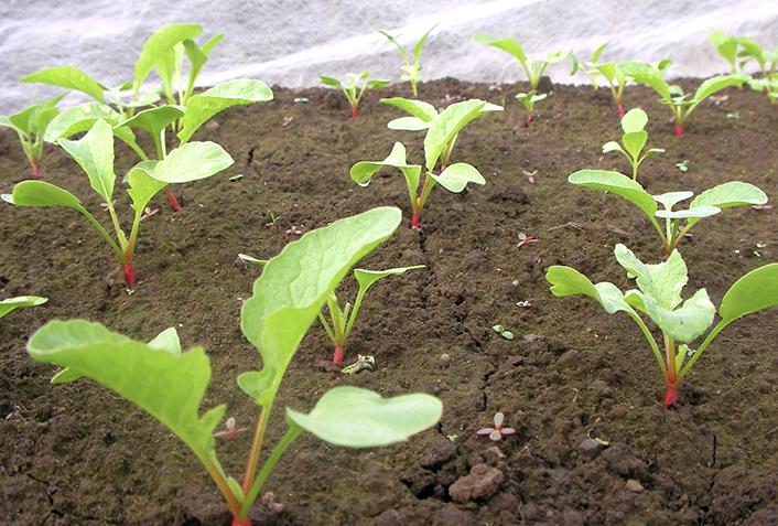 家庭菜園で有機栽培をするメリット