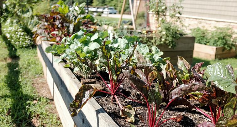 重要なのは日当たり!家庭菜園で育てやすい野菜を紹介