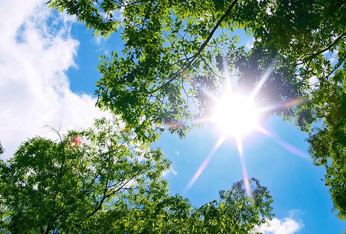 日光大好き:陽性植物