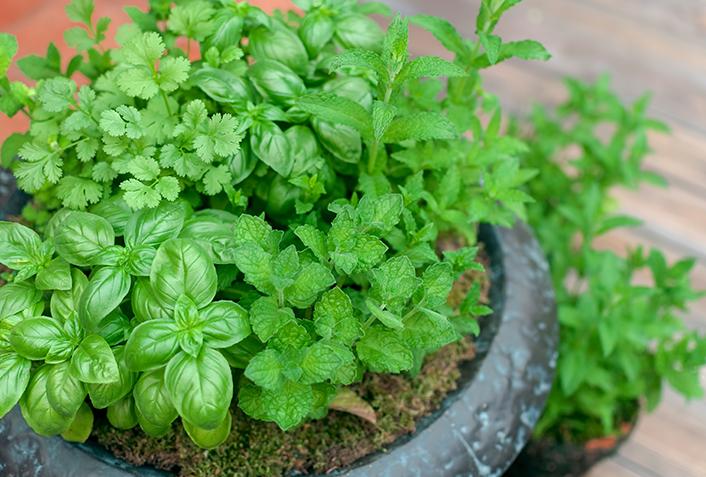 育てやすい陰性植物