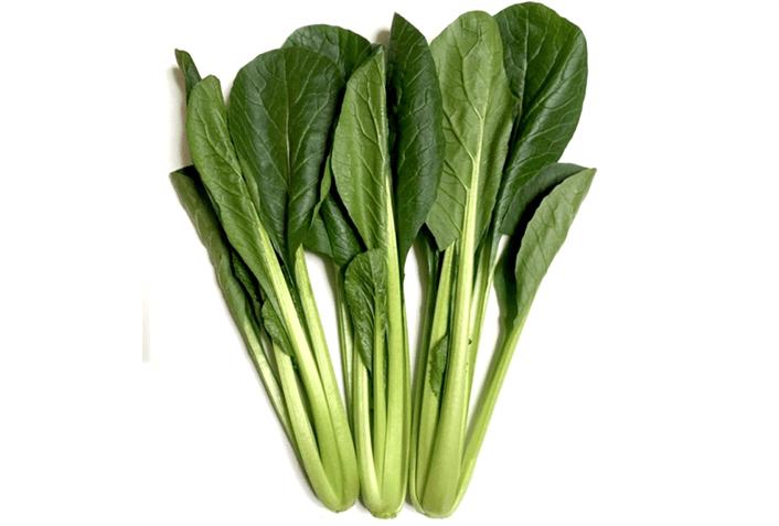 家庭菜園で秋に収穫できるおすすめ野菜その1 小松菜