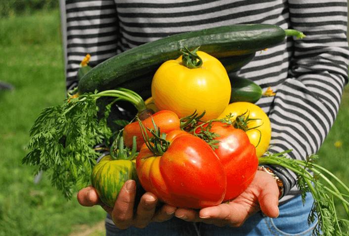 家庭菜園の肥料の選び方